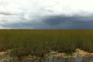 A storm brews over the Everglades.