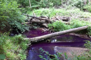 Tracer test in an urban stream in 2011. The metabolically active dye turns pink after serving as a substrate for microbial respiration.