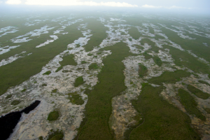 Overhead view of the strikingly patterned ridge and slough landscape, Florida Everglades. Maintaining and restoring this patterning is a focus of current management efforts.