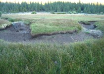Dry meander bend in wet meadow restoration project, CA.