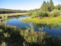Example of pond-and-plug restoration of wet meadows, Plumas National Forest, CA.