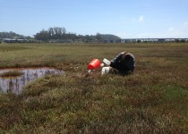 Marissa Goodman collects sediment samples from a tidal marsh.