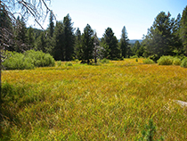Wet meadow in Sagehen Reserve, CA.