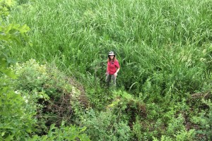 Prof. Larsen stands amongst Carex at Great Marsh, PA